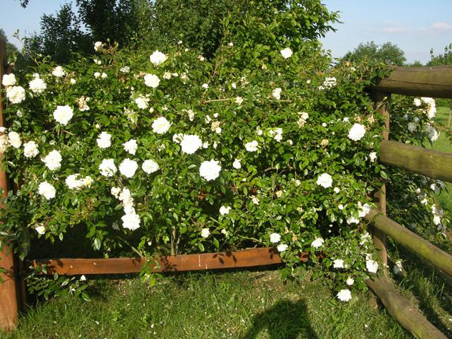 Services la personne sarthe jardinage p pini res for Service a la personne jardinage