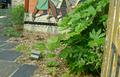 Végétalisation patio